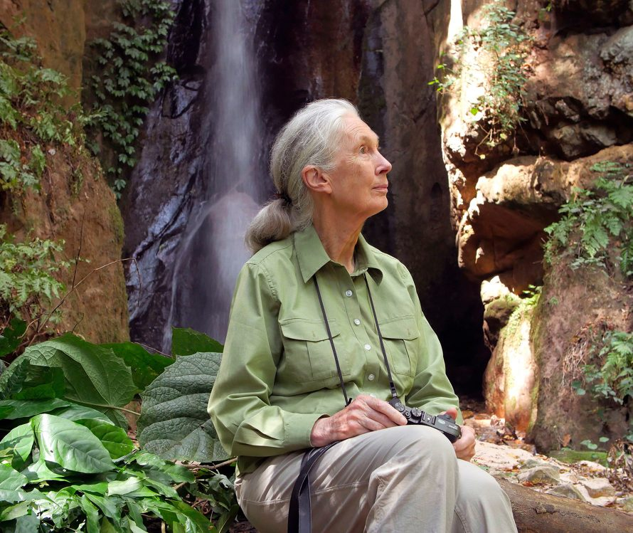 Photo © the Jane Goodall Institute - Bill Wallauer